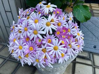玄関先の花の写真・画像素材[1090296]