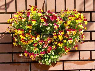 ハート型の花の写真・画像素材[1090302]