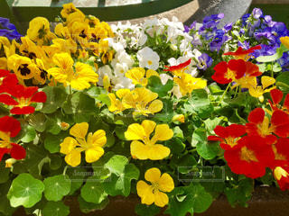 色とりどりの花の写真・画像素材[1106973]