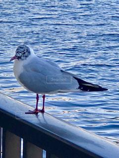 水鳥の写真・画像素材[1119723]
