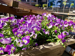 船宿の花の写真・画像素材[1120822]