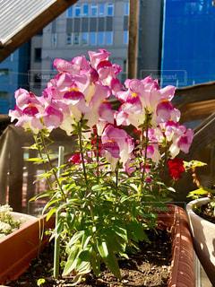 ヒラヒラの花の写真・画像素材[1121731]
