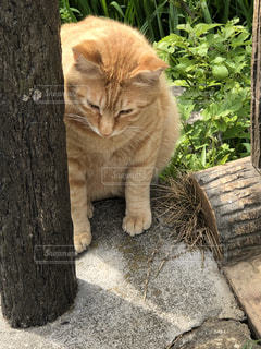 控えめな猫の写真・画像素材[1131593]