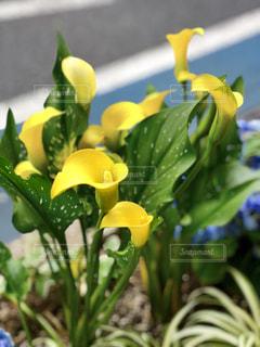 黄色い花の写真・画像素材[1192542]