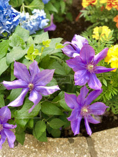 紫の花の写真・画像素材[1192543]