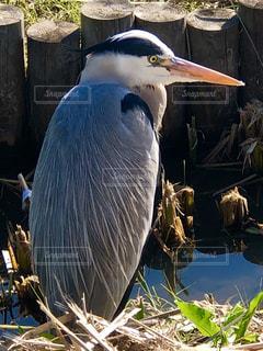 大きな鳥の写真・画像素材[1966774]