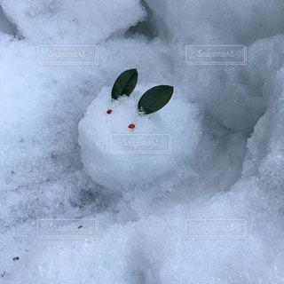 雪うさぎの写真・画像素材[1680279]