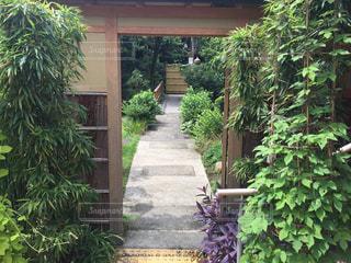 料亭風な庭の写真・画像素材[1090375]