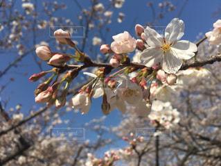 春の訪れの写真・画像素材[1118127]