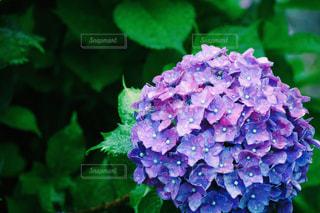 花の写真・画像素材[1091477]