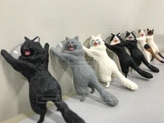 その口を開いて黒グレーと白猫 - No.1119322