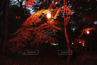 紅葉ライトアップの写真・画像素材[1092434]
