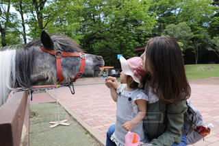 動物園の写真・画像素材[1093792]