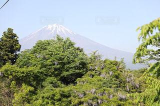 富士山と藤の写真・画像素材[1093793]