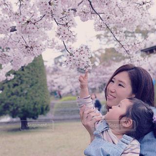 桜の写真・画像素材[1096734]