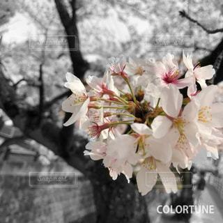 近くの花のアップの写真・画像素材[1099025]