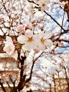 木の枝に花の花瓶の写真・画像素材[1102038]