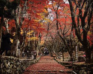 滋賀の紅葉の写真・画像素材[1091381]