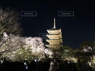 東寺の桜の写真・画像素材[1099171]