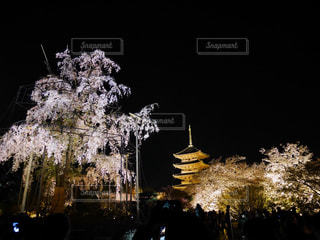 桜と世界遺産の写真・画像素材[1099551]