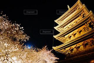 東寺と桜の写真・画像素材[1099553]