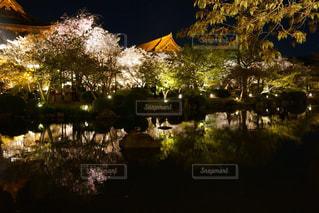 水面に映る桜の写真・画像素材[1099554]