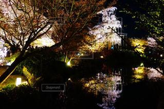 鏡桜の写真・画像素材[1099556]