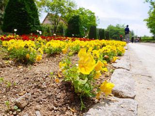 庭の黄色い花の写真・画像素材[2169181]