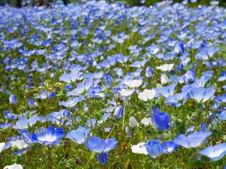 花のクローズアップの写真・画像素材[2169182]