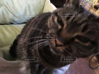 猫様の写真・画像素材[1091733]