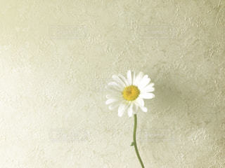 一輪の花の写真・画像素材[1157876]