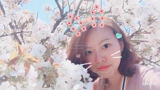 お花見 - No.1092302