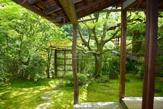 新緑の庭の写真・画像素材[1092303]