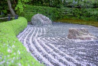 桜の河の写真・画像素材[1092305]