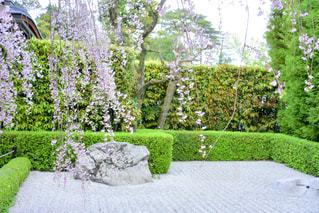 枯山水と桜の写真・画像素材[1092306]