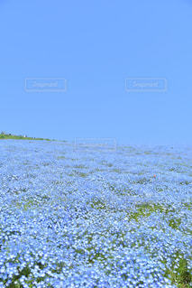 真っ青な花畑 - No.1114862