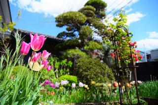 春のガーデン - No.1116543