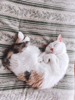 うちの猫の写真・画像素材[1165851]