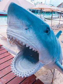 サメのモニュメントの写真・画像素材[1190777]