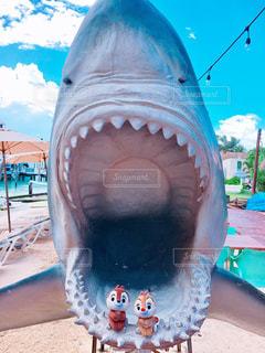サメに食べられそう!の写真・画像素材[1190778]