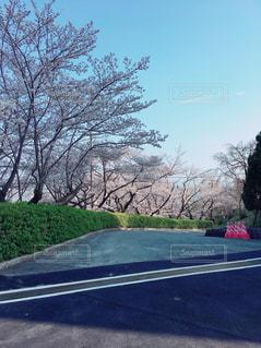 桜の写真・画像素材[1091938]
