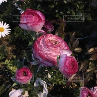 植物にピンクの花の写真・画像素材[1092117]
