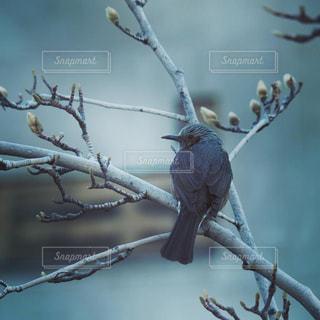 春を待つ鳥の写真・画像素材[2262930]