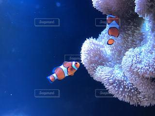 泳ぐ魚たちの写真・画像素材[1092678]