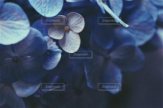 花の写真・画像素材[1093406]
