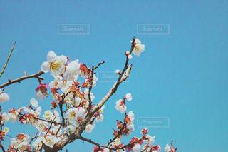 自然の写真・画像素材[1093422]