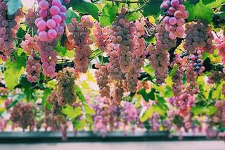 色とりどりの花のグループの写真・画像素材[1640367]