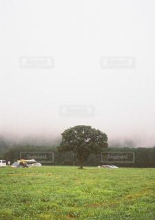 緑豊かな野原で放牧する牛の群れの写真・画像素材[2550061]