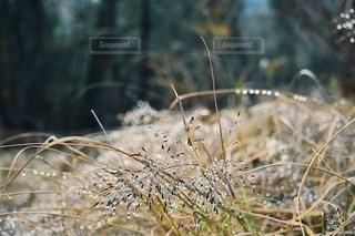 自然の写真・画像素材[2756019]