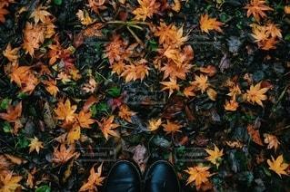 自然の写真・画像素材[2756022]